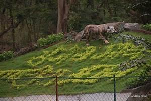 Sanjay Gandhi National Park, Mumbai – An Abode for the ...