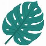 Tropical Daun Icon Gambar Tropis Icons Leaf