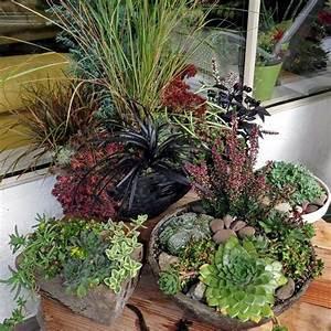 deko aus sukkulenten idee fur ein arrangement aus With katzennetz balkon mit gucci flora garden