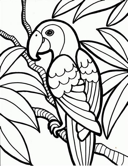Pages Coloring Colouring Adult Printable Adults Templates