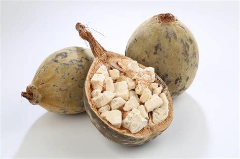 Baobab Tree: Do its Benefits Make it the Best Super Fruit