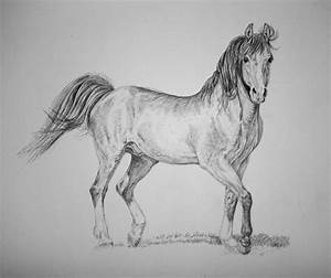 Horse Drawing ~ 3D Drawing