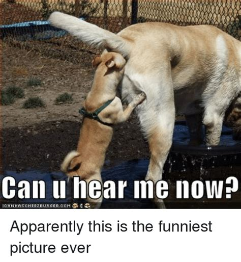The Best Memes Ever - the funniest picture ever www pixshark com images galleries with a bite