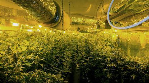Auf Tiefgarage Pflanzen by Kieler Polizei Findet Cannabis Plantage In Tiefgarage