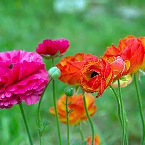 Blumen Für Schattigen Balkon : sommerblumen balkonania ~ Frokenaadalensverden.com Haus und Dekorationen