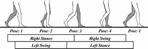 7 Gait Cycle Expressed By Swing Phase And Stance Phase