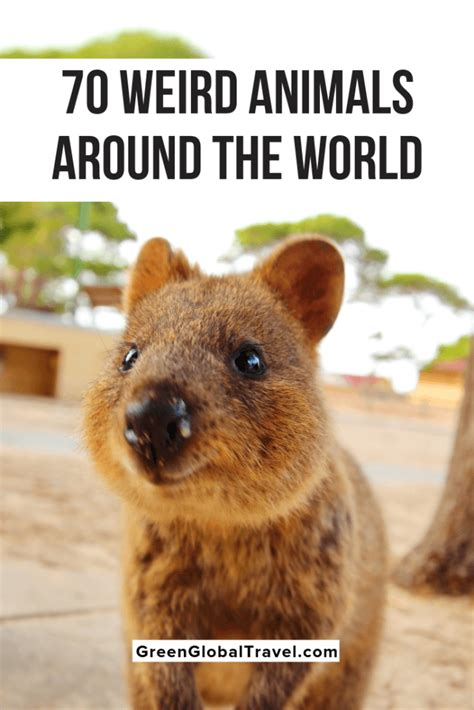 70 Cool & Weird Animals Around the World (An Epic Guide