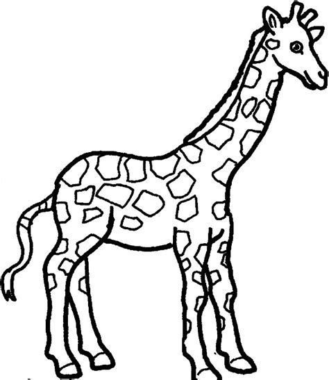 baby giraffe coloring pages bestofcoloringcom
