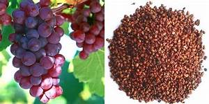 The Grape Seed Extract Tops Chemo In Killing Those Dangerous Cancer Cells  Here Is Why