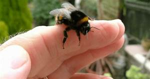 Can Bees Kill You – Bees & Beekeeping Information
