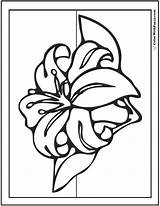 Lily Spring Coloring Flowers Stargazer Calla Adult Printables Pdf Colorwithfuzzy Template Sunflower sketch template