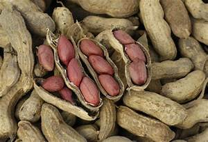 Growing Peanuts at Home   Southern Exposure Seed Exchange