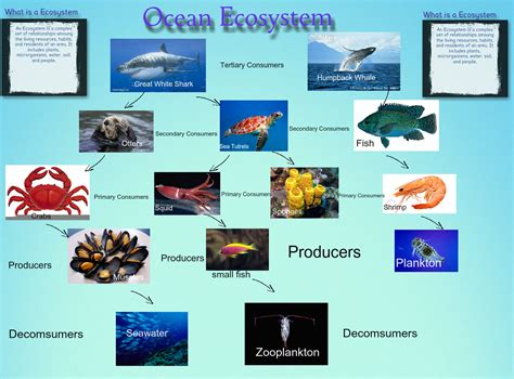 ecosystem ocean emma consumers posters fish miller producers glogster ecosystems science edu complex