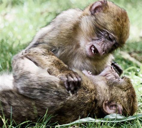Animals Gone Wild (photography) Noupe