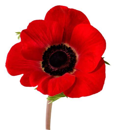 remberance poppy remembrance day commemoration поминальний день воїна ukrainian canadian congress toronto branch