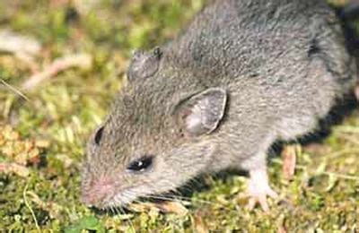Keeping Animal Pests Out Of Your Garden Gardener's Supply