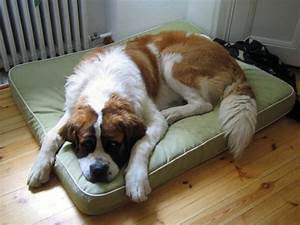 best dog bed arthritis ideas for best dog bed vaneeesa all With best dog bed for arthritis