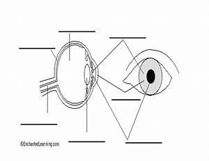 14 Best Images Of Eye Anatomy Worksheet
