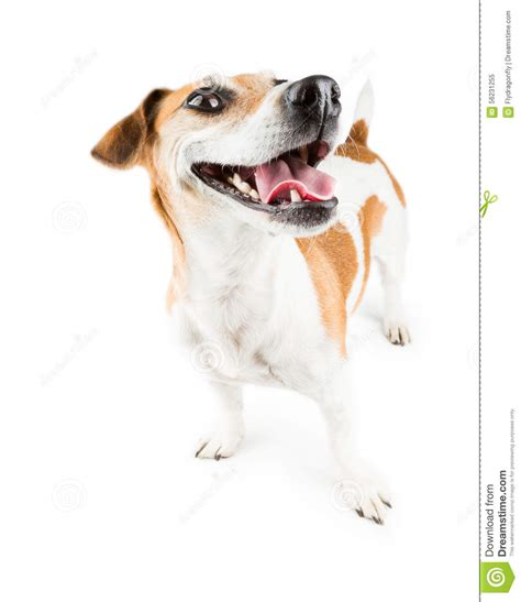 Cheerful Smiling Dog stock image. Image of happy ...
