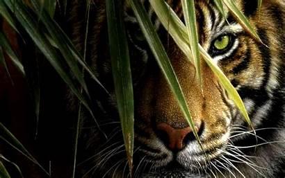Tiger Wallpapers Widescreen 4k Desktop