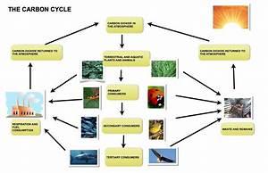 Describing A Natural Process In Task 1 Writing