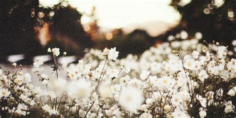 See actions taken by the people who manage and post content. (23) random header | Tumblr | Pretty things | Facebook ...