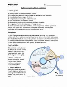 Mitosis Vs Meiosis Venn Diagram Answers