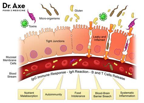Heal Leaky Gut Syndrome Autoimmune Disease Dr Axe