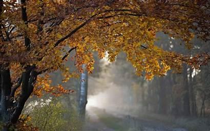 Autumn Rain Fall Nature Tree Wallpapers Trees