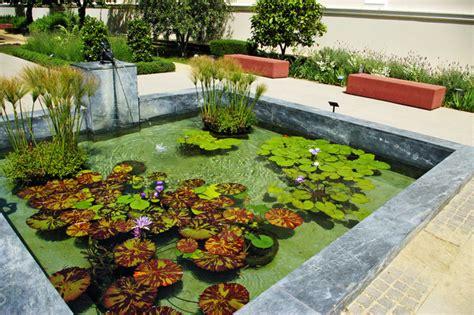 plantes eau bassin tout