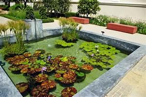 Plante Pour Bassin Extérieur : plantes eau bassin tout ~ Premium-room.com Idées de Décoration