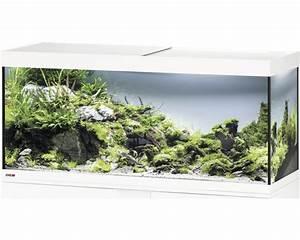 Aquarium Ohne Wasserwechsel : aquarium ohne filter zuhause image idee ~ Eleganceandgraceweddings.com Haus und Dekorationen