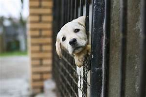 Flashback Friday: PETA Didn't Meet its Own Animal Shelter ...