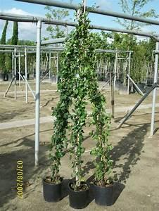 Tulpenzwiebeln Im Topf Pflanzen : pflanzen topf lavendel munstead 7cm topf 5 pflanzen g ~ Lizthompson.info Haus und Dekorationen