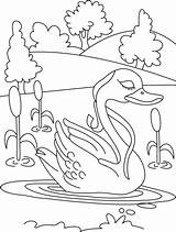 Duck Coloring Pond Pages Lonely Drawing Ducks Colouring Bestcoloringpages Animal Getdrawings Cool Kid Colour sketch template