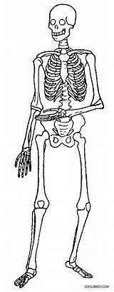 Skeleton Coloring Pages Skeletal Printable Anatomy Fun System Cool2bkids Makes Template Radiokotha sketch template