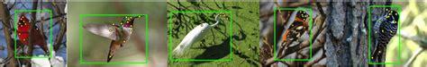 birdsnap   plover   turnstone  killdeer