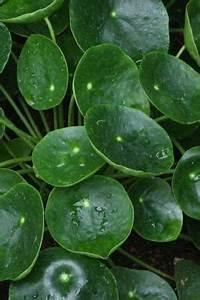 Zimmerpflanzen Alte Sorten : blattschmuckpflanzen diverse sorten tolle seite ~ Michelbontemps.com Haus und Dekorationen