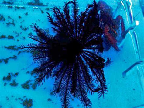 starfish ellis aquatics