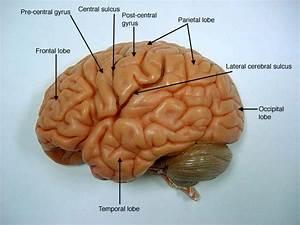 Brain Jack Image   U0e21 U0e34 U0e16 U0e38 U0e19 U0e32 U0e22 U0e19 2013
