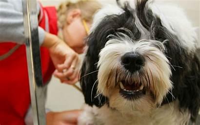 Grooming Dog Wide Wallpapersin4k