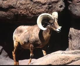 Sonoran Desert Animals