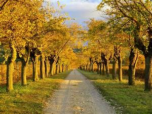 Free Images : tree, nature, path, outdoor, road ...