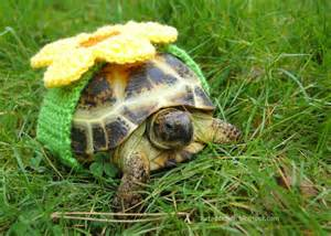 tortoise design adorable crocheted cozies make pet turtles stand out tortoise cozy yellow flower inhabitat