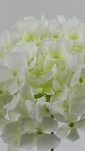 Hortensie Weiß Winterhart : hortensie gro 32cm wei ar k nstliche blumen kunstblumen seidenblumen ebay ~ Orissabook.com Haus und Dekorationen