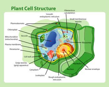 cell biology  world encyclopedia