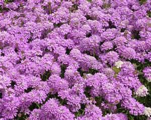 flowers ornamental plants