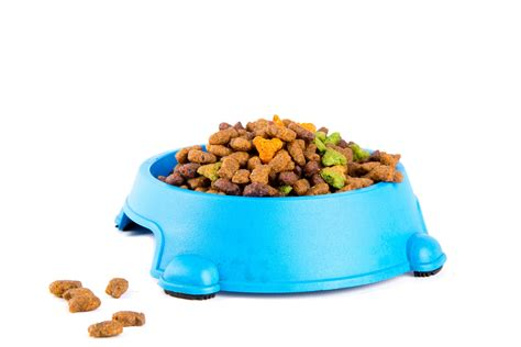 dry cat food  stock photo public domain pictures