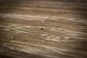 Texture Terrasse Bois : images gratuites main aile bois texture feuille sol ~ Melissatoandfro.com Idées de Décoration