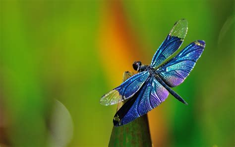 myths legends about dragonflies their symbolism in